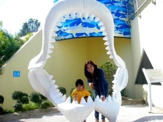 โอเชียนปาร์ค: Ocean Park in Hongkong with the girls...Catya took the pic while Camille and I posed.