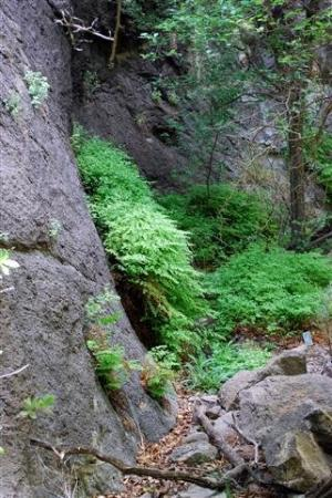 Fort Davis, เท็กซัส: fern in the valley