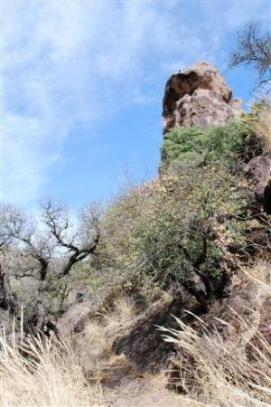 Chihuahuan Desert Nature Center & Botanical Garden: hiking in the chihuahuan desert