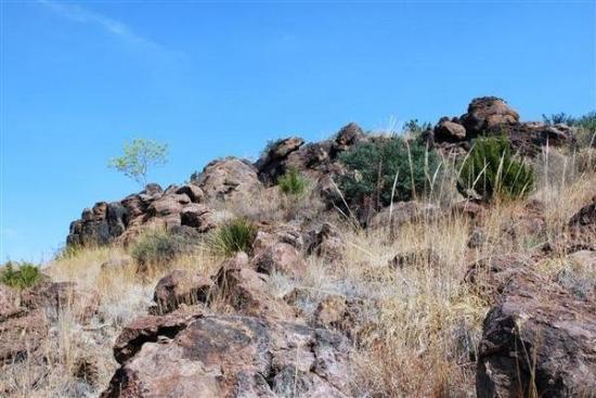 Chihuahuan Desert Nature Center & Botanical Garden: chihuahuan desert