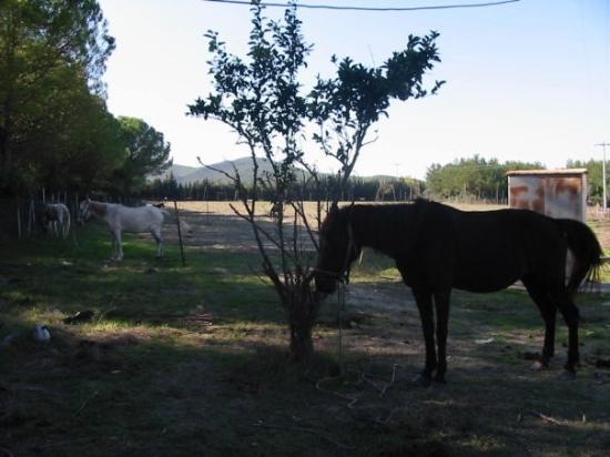 Selcuk ภาพถ่าย