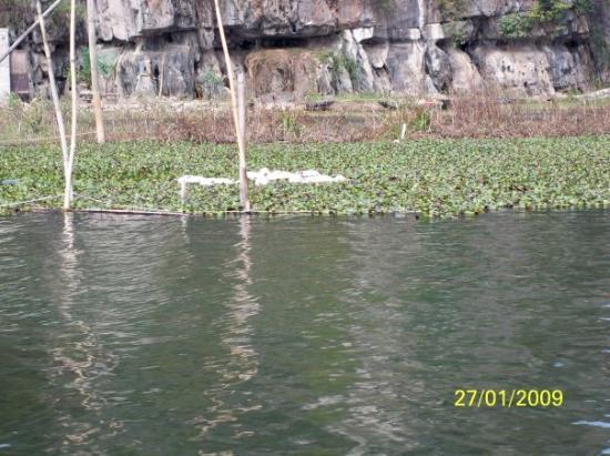 ฮานอย, เวียดนาม: 鴨子在暢泳