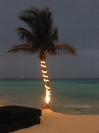 พลายาเดลคาร์เมน, เม็กซิโก: that evening after I got back from Tulum
