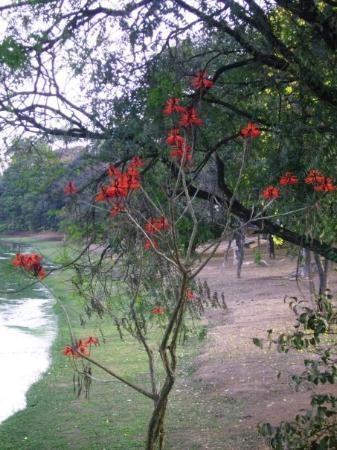 เบโลโอรีซอนตี: Vacances au Brésil, août 2008,lac de Pampulha, Bello Horizonte