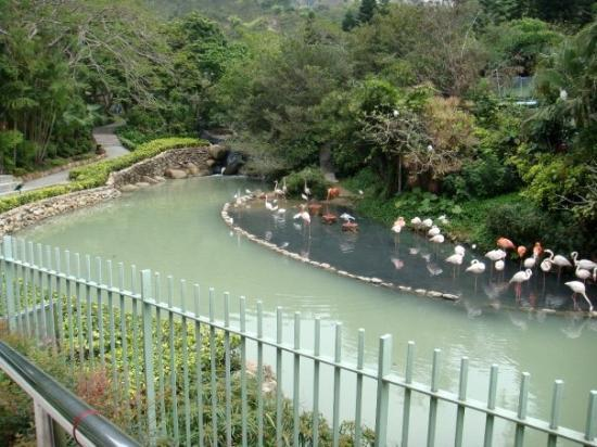 โอเชียนปาร์ค: Ocean Park, Hong Kong Region, China