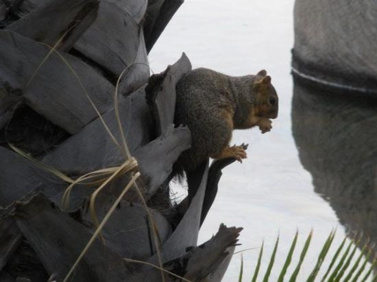 La Brea Tar Pits and Museum: Don't fall in the tar pit, little squirrel!
