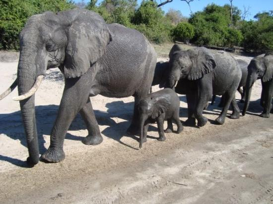 Chobe National Park, บอตสวานา: Nice family passing by our car