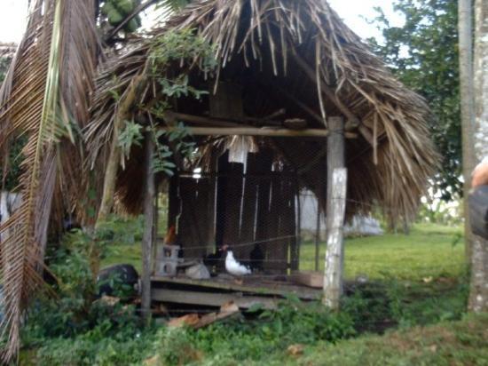 เบลีซซิตี, เบลีซ: The chicken house
