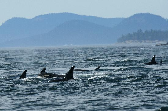 Western Prince Whale & Wildlife Tours: The Pod