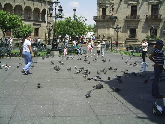 กวาดาลาฮารา, เม็กซิโก: Zócalo