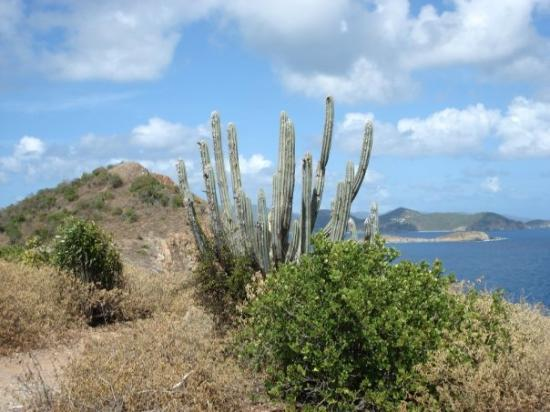 เซนต์จอห์น: St. John, Caribbean - Ram Head