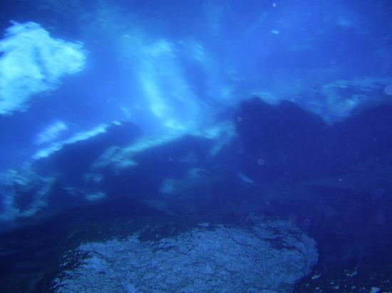 Mayan Aqua Dive: Diving in Cenotes, just amazing.