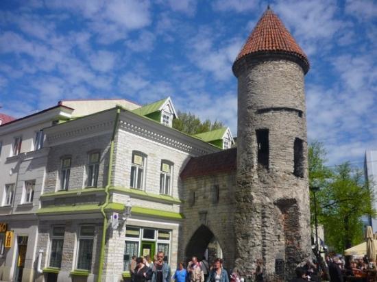 ทาลลินน์, เอสโตเนีย: At the gate