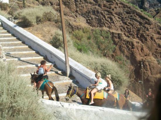 ซานโตรีนี, กรีซ: Donkeys