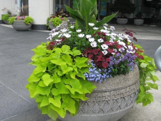 แวนคูเวอร์, แคนาดา: More pretty flowers