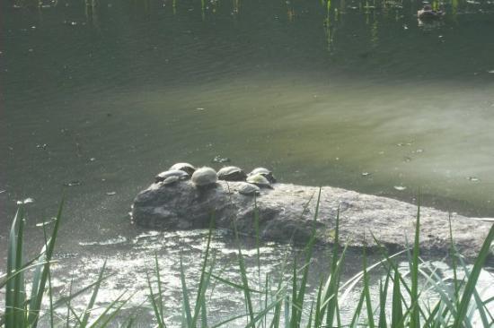 เซ็นทรัลปาร์ค: Tortugas!