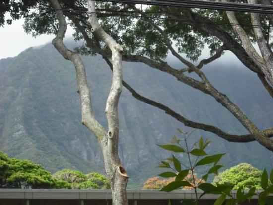 ไวมานาโล, ฮาวาย: My view from the clinic everyday..