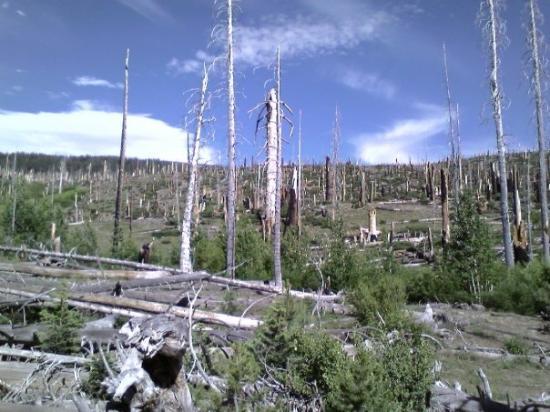 Mammoth Lakes, Kalifornien: Rainbow Falls fire damage