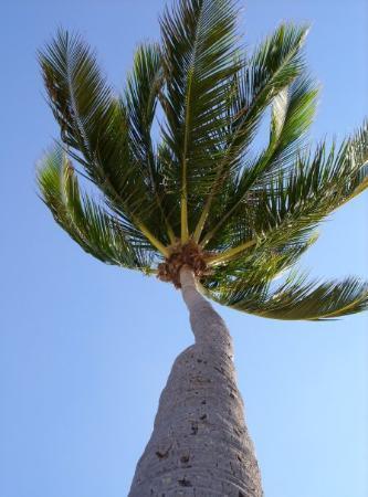 Fort Lauderdale Beach ภาพถ่าย