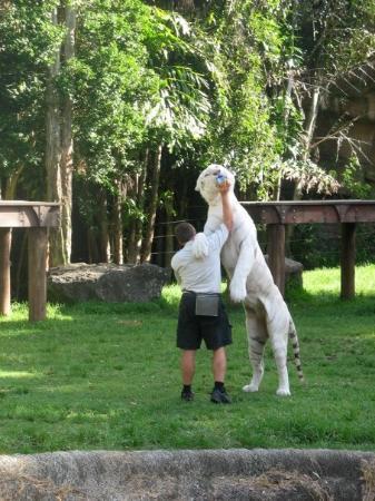Coomera, ออสเตรเลีย: Dreamworld