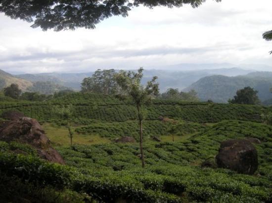 มุนนาร์, อินเดีย: Enchanting Kerala ! I would say - where the Blue meets the Green !