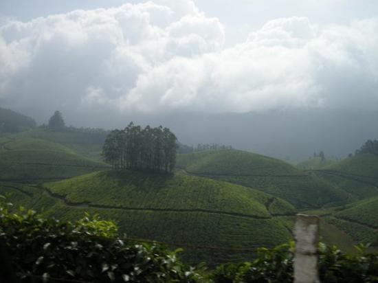 มุนนาร์, อินเดีย: With its 7 extensive gardens covering approximately 24,000 hectares, the company is today the la