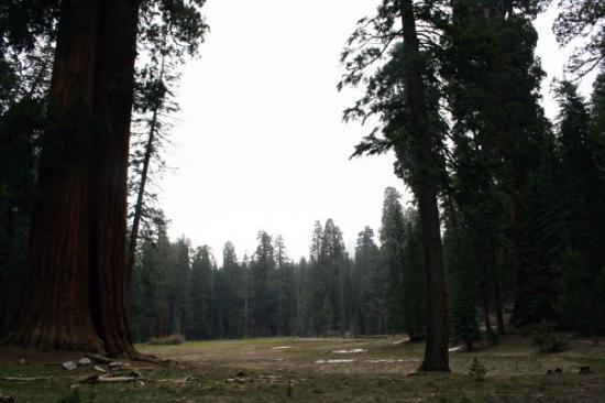 Sequoia and Kings Canyon National Park, แคลิฟอร์เนีย: Three Rivers, California Sequoia National Park Big Trees Trail