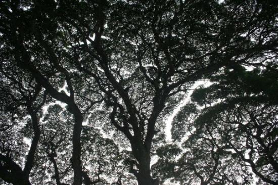 มะนิลา ภาพถ่าย