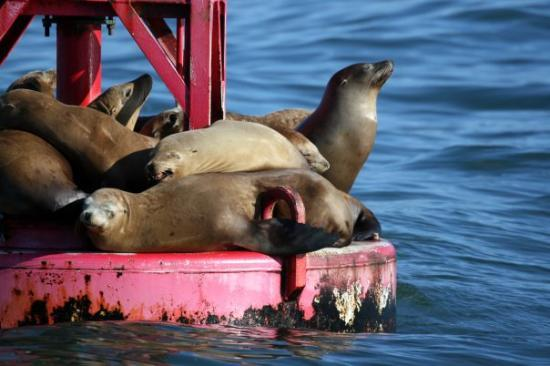 Channel Islands National Park, แคลิฟอร์เนีย: Channel Islands, California California Sea Lions