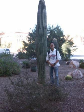 ทูซอน, อาริโซน่า: hahahahah  NI Kaktus2 tumbuh subur di Dalam Univeristy of Arizona..  Tapi cuaca dingin bange