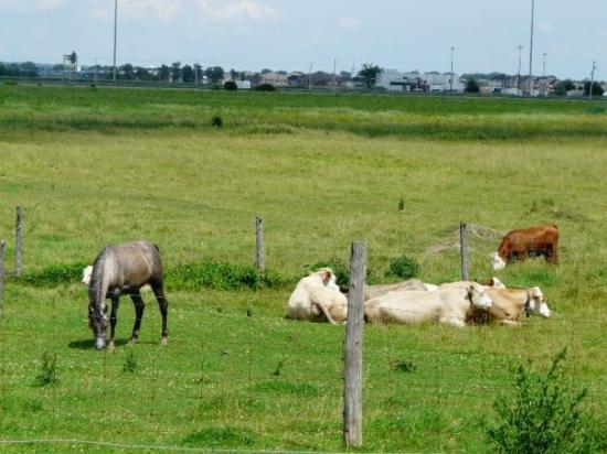 มอนทรีออล, แคนาดา: 18 Jul 09 Saturday morning in the country