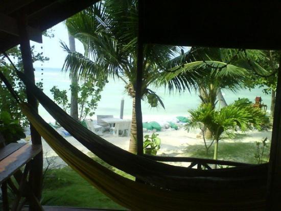 เกาะพะงัน, ไทย: Coral Bungalow view...