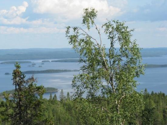 Koli National Park ภาพถ่าย