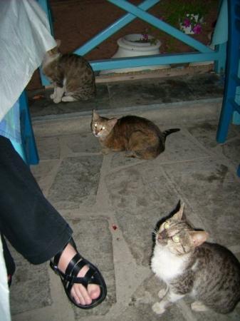 Potos, กรีซ: Belagerung beim Abendessen