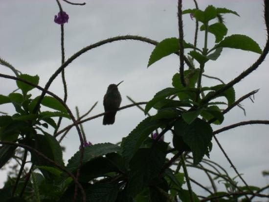 อุทยานแห่งชาติ Manuel Antonio National Park, คอสตาริกา: Hummingbird silouette