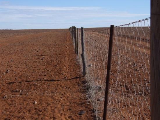 Coober Pedy, ออสเตรเลีย: the Dog Fence