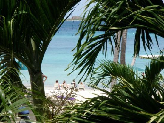 เซนต์ โทมัส: View thru the palm trees.