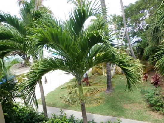 เซนต์ โทมัส: A view from the balcony.