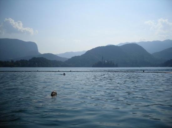 Lake Bled: bañito en el lago a 26º :)