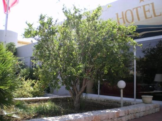 ตราปานี, อิตาลี: гранатовое дерево, рядом со входом