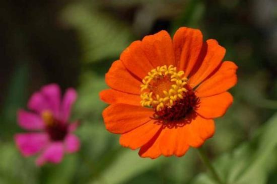 Vallarta Botanical Gardens ภาพถ่าย