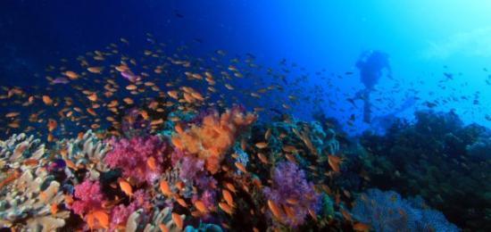เมือง Savusavu, ฟิจิ: The beauty is just too much. I'm heading back to the boat. Somewhere beneath the waves, Fiji. A