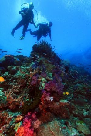 เมือง Savusavu, ฟิจิ: 70' down. Bligh Straits, Fiji. August 2009