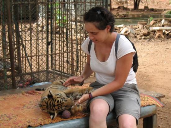 เมืองกาญจนบุรี, ไทย: bébé tigre et moi