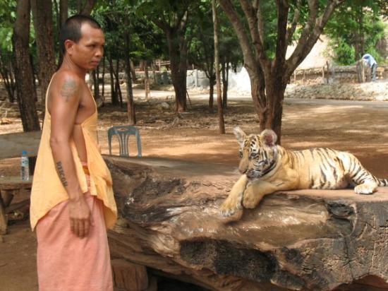 เมืองกาญจนบุรี, ไทย: le temple des tigres