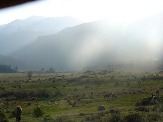 เอสเตสพาร์ค, โคโลราโด: Estes Park, CO, United States elk