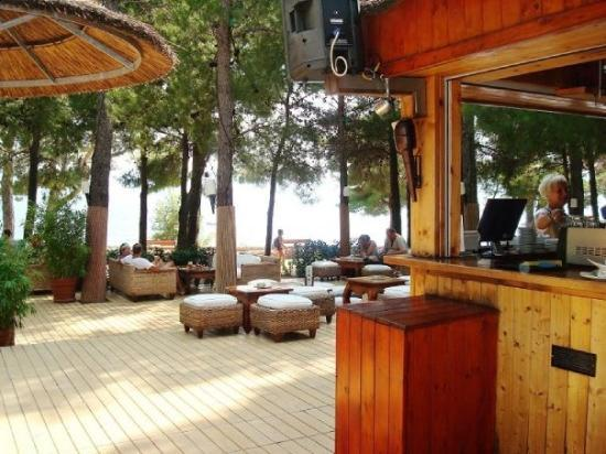 Bol, โครเอเชีย: The woodland bar outside
