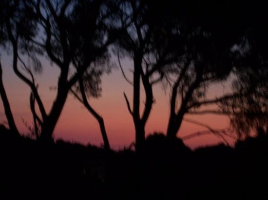 Banyuls-sur-mer, ฝรั่งเศส: La vue de notre tente a 6h du mat'