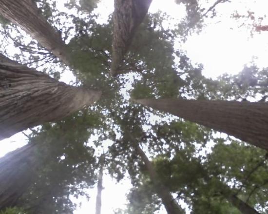 แกรนต์แพส, ออริกอน: Redwood National Forest