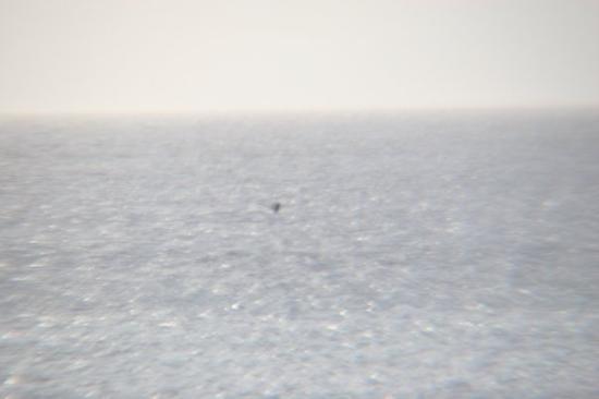 เมาอิ, ฮาวาย: The whale's tale